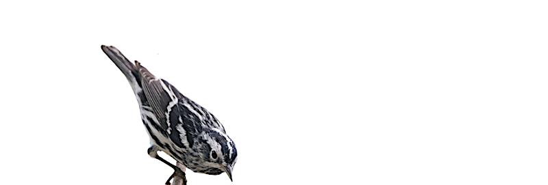 BIRD IS THE WORD!
